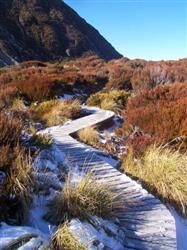 Chemin en bois sur le Mont Cook