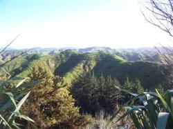 Les collines de l'île du Nord de la Nouvelle-Zélande