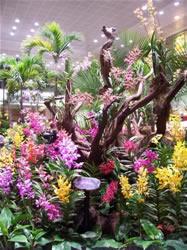 Les fleurs dans l'aéroport de Singapour