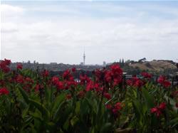 Photos des fleurs à Auckland