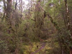 Les forêts de l'interieur de la Nouvelle-Zélande