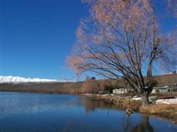 L'arbre du lac Alexandrina