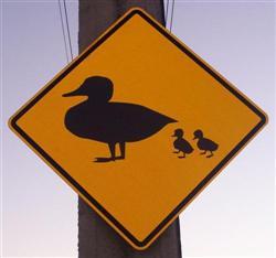La panneau du canard