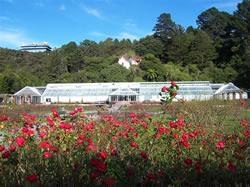Le Botanic Garden de Wellington