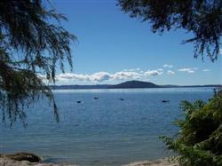 Les cignes noirs sur le lac rotorua