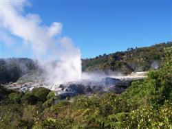 Le Pohutu Geyser de Rotorua