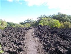 Le chemin en roche volcanique à Rangitoto