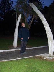 Squelette de baleine à Kaikoura