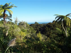 Titirangi en Nouvelle-Zélande