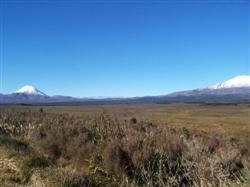 Le Ngauruhoe et le Ruapehu dans la plaine du Tongariro