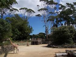 Le zoo d'Auckand